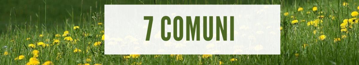 7 comuni news